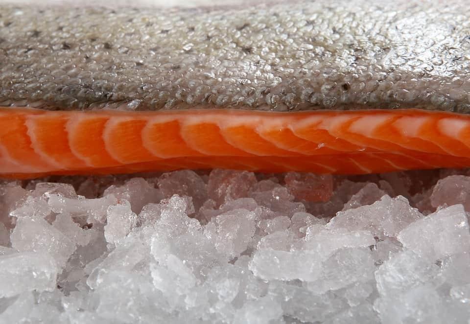 eels fish