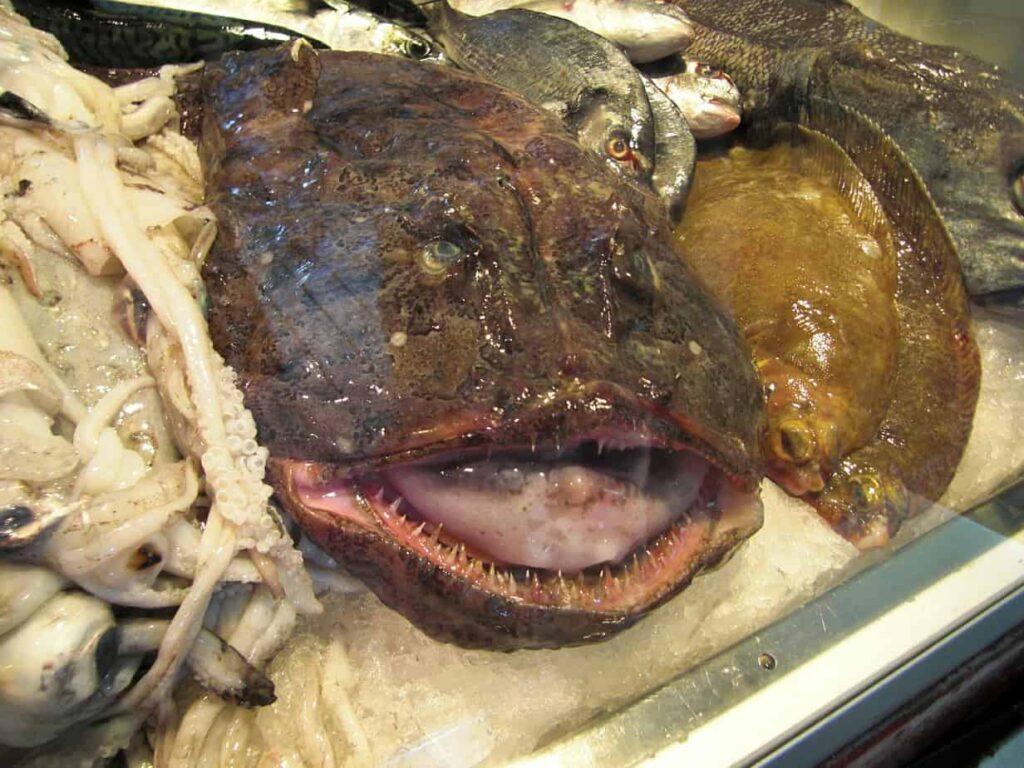 monkfish worst looking food