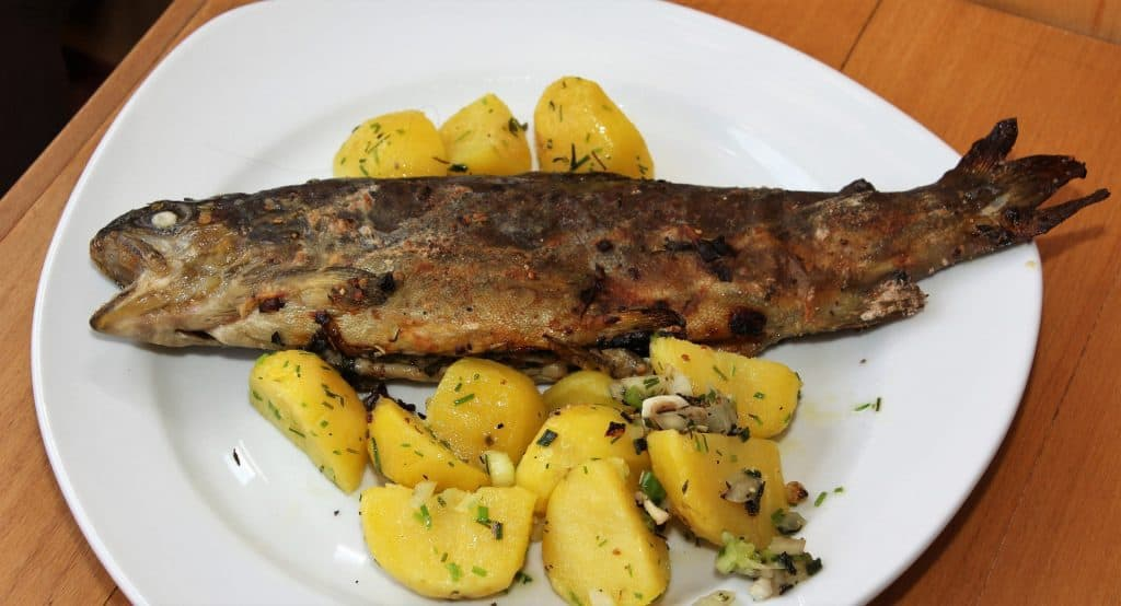 ohrid trout