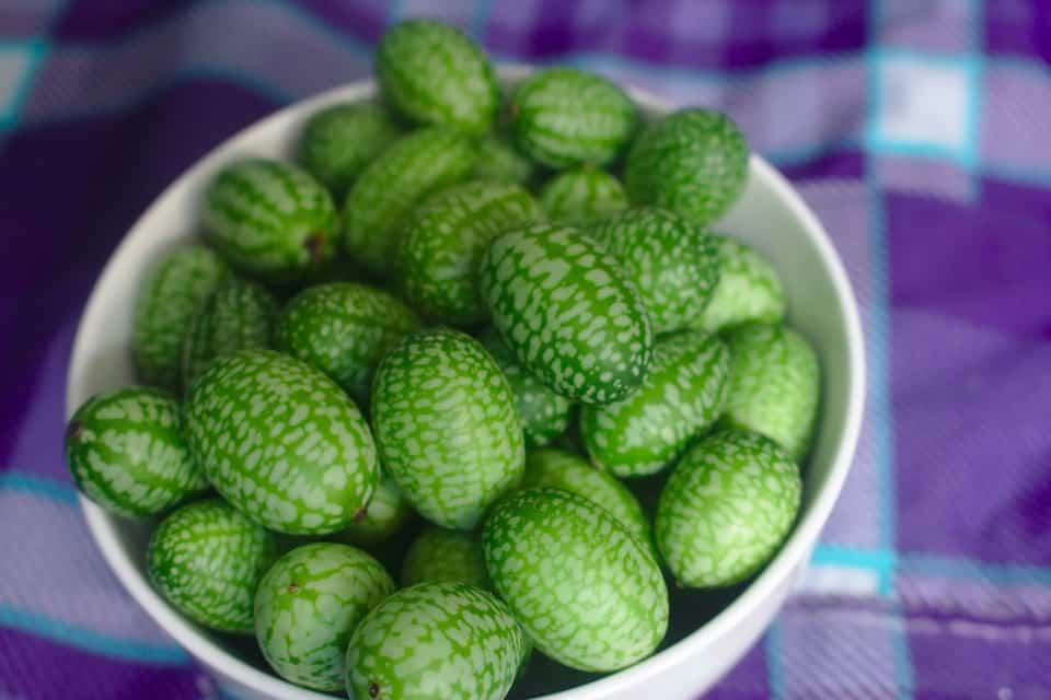 cucamelon weird exotic fruits