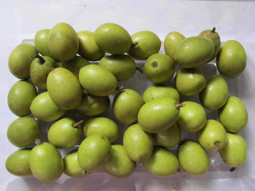 indian olives