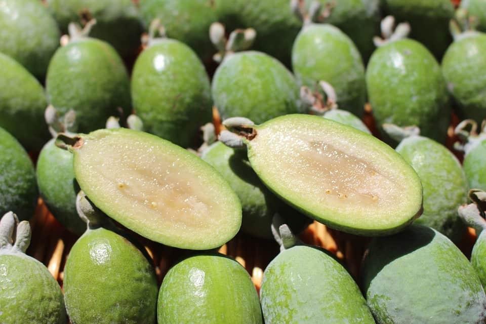 fejioa weird exotic fruits